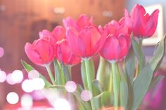 Pretty Pink Tulips and Bokeh . . . beautiful!