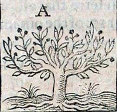 fruit tree drawing - Google Search