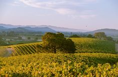 The Differences Between Mountain and Valley Wines, Explained | Wine Enthusiast Magazine