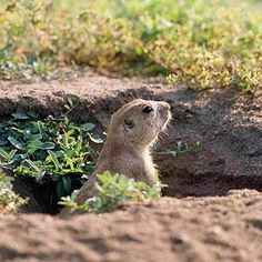 The History of Groundhog Day from Better Homes and Gardens