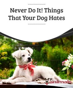 Never Do It! Things That Your Dog Hates  Sometimes we do things that bother or mortify our pets without even realizing it. We think that they are actions that do not make him uncomfortable, or that he even likes them.Pay attention because in the following article, we are going to talk about some things that your dog hates.