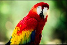 25 Amazing and Colorful Birds Pictures