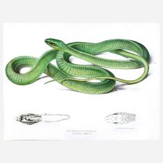 Green African Snake Print now featured on Fab.