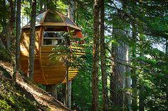 The HemLoft - Une cabane dans l'arbre