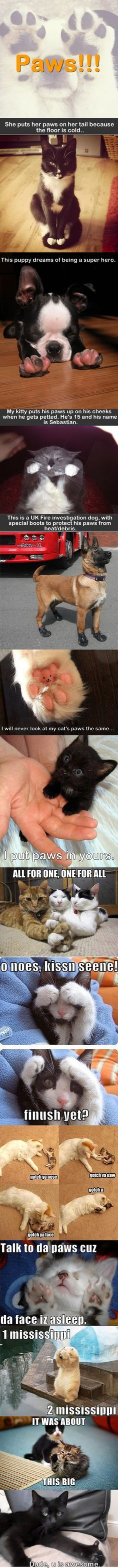 Paws!!!! cute paws of puppies and kitten