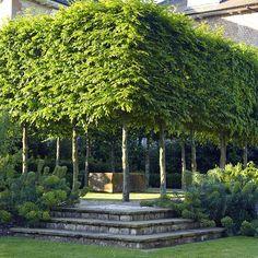 Blog - Kilby Park Tree Farm