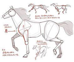 komiti: あとがき: 馬は動物の中でも、描くのが難しいモチーフです。 しかし、特徴さえ押さえておけば、全部丸々リアルに描か...