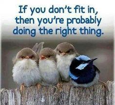 Don't Conform