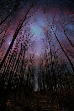 midnight stroll