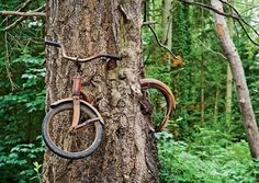 12 Most Amazing Trees Growing Despite Obstacles - ODDEE