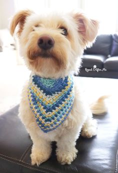 Bandanas, Pet Daycare, Crochet Dog Sweater, Mini Poodles, Crochet Animals, Crochet For Dogs, Free Crochet, Pet Clothes, Diy Clothes For Dogs