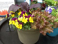 Veggies and Violas- match made in container gardening heaven Home Grown Vegetables, Veggies, Match Making, Container Gardening, Heaven, Backyard, Plants, How To Make, Inspiration