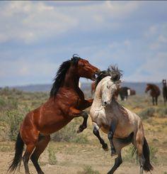 Pretty Horses, Beautiful Horses, Animals Beautiful, Andalusian Horse, Friesian Horse, Arabian Horses, Equine Photography, Wildlife Photography, Majestic Horse