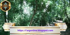 Viaggio attraverso i Parchi Nazionali dell'Argentina: Parco Nazionale dell'Iguazu. | Argentina Tour Journey, Tours, Plants, Buenos Aires Argentina, The Journey, Flora, Plant
