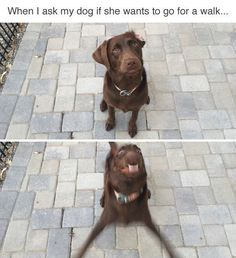 Trendy Funny Pictures With Captions Hilarious Lol Animal Memes Funny Animal Jokes, Funny Dog Memes, Really Funny Memes, Cute Funny Animals, Funny Animal Pictures, Cute Baby Animals, Funny Shit, Funny Stuff, Dog Humor