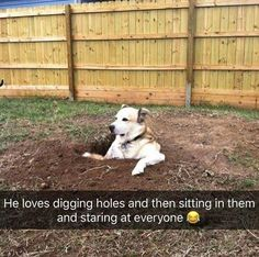 Funny Animal Pictures - View our collection of cute and funny pet videos and pics. New funny animal pictures and videos submitted daily. Animals And Pets, Funny Animals, Cute Animals, Funny Dog Pictures, Animal Pictures, Funny Photos, Dog Memes, Funny Memes, Dog Humor