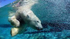 De mooiste wildlife foto's van week 10 vind je op: http://natgeotv.com/nl/foto/galerijen/foto-wildlife-10