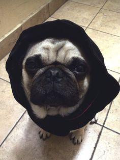 homerjaypug: i can't pee or poop in the rain ;-;