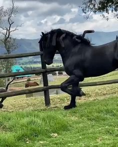 / Wonderful Friends ~ I love them ❤️❤️❤️ Big Horses, Black Horses, Cute Horses, Horse Love, The Horse, Black Stallion Horse, Horses In Snow, Horses And Dogs, Andalusian Horse