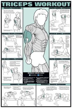"Triceps Workout 24"" X 36"" Laminated Chart"