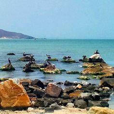 Buen día para todos @Regrann from @joseboadasmillan -  #paisajemarino#playazaragoza#pedrogonzalez#islademargarita#nuevaesparta#venezuela#ig_margarita#fotomargarita #Regrann