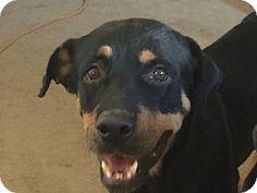 Gilbert, AZ - Rottweiler. Meet Demi, a dog for adoption…