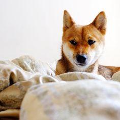 This cold morning I woke up in Moscow! / Сегодня утром проснулась уже в холодной Москве! ✌️☁️