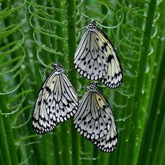 ~~trio on green by kayes c~~