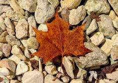Texas Fall Color / Lost Maples & Garner State Park - Spicy World Simple and Easy Recipes by Arpita Texas Parks, State Parks, Lost Maples State Park, Garner State Park, Fun Fall Activities, Little River, South Texas, Small Trees, Day Trip
