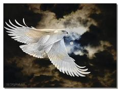 A White eagle appeared in one of my meditations, dropped a white feather for me. The 3 Indian shamans who showed up in one of my dreams also appeared in this meditation.