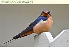 A Fukushima non volano più le rondini.