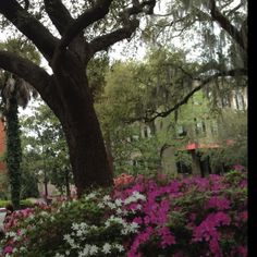Spring, Savannah, GA