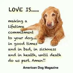 ♥ Adopting a dog means you take care of him/her always! If you can't do this, DON'T adopt a dog or any pet!