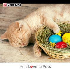 While I'm waiting for the Easter bunny, I might take a little nap. While you're waiting, you could pin for a chance to WIN FREE Purina® for a year! Pin your favorite pic of cats or dogs on spring break and you could be one of 10 winners. Enter today! NO PURCHASE NECESSARY. Valid in 50 U.S.  D.C. Must be 18+ (19+ in AL  NE; 21+ in MS),  own a cat or dog or both. Ends 3:00 p.m. ET on 4/29/14. Void where prohibited. See Official Rules at http://sweeps.piqora.com/PurinaSpringBreak. #PurinaSweeps