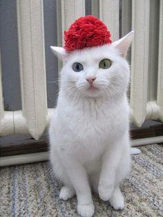. cats
