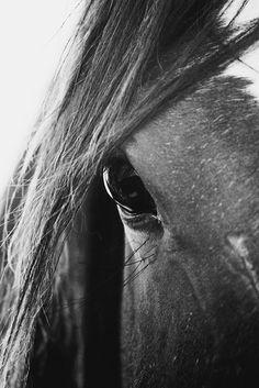 www.pegasebuzz.com | Equestrian photography : Victoria Aguirre.