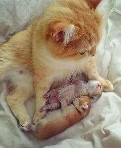 Mom and her newborn kittens!