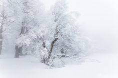 """Winter kingdom - Misty forest in the Ore Mountains, Czech Republic, March 2015. WEB: <a href=""""http://www.tomasvocelka.cz"""">www.tomasvocelka.cz</a> MAIL: fotovocelka@gmail.com  FACEBOOK: Tom Vocelka Photography  www.facebook.com/tomvocelka.photography"""