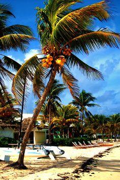 Bahamas, at the Old Bahama Bay Resort