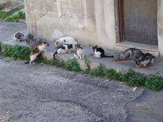 The well-fed stray cats of Haifa, Israel.