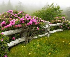 Flower laden fence