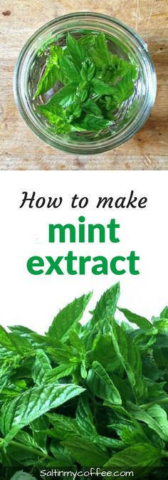 Make your own mint extract! It's so easy, and makes a wonderful DIY Christmas or Hostess gift! #DIY #Herbs