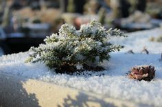 Landscapes In Miniature