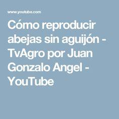 Cómo reproducir abejas sin aguijón - TvAgro por Juan Gonzalo Angel - YouTube