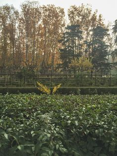 otoño-vagacosmos