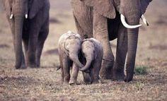 elephant hugs. I cry now.
