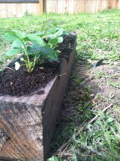 Dug Out Strawberry Planter Tutorial
