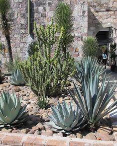 cactus garden in San Miguel de Allende, Mexico - Champ Gardens Cacti And Succulents, Cactus Plants, Cactus Art, Mexican Garden, Arizona Gardening, Dry Garden, Garden Paths, Xeriscaping, Garden Landscape Design