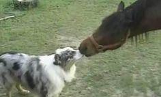 Horse & dog caught smooching!