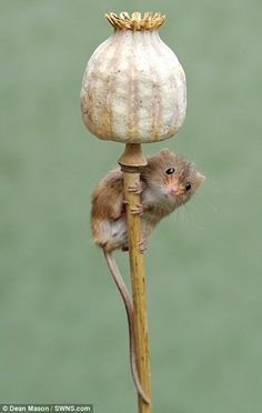 Animals that Start With D - (Dormouse) This small and cute creature belongs to the rodent family and. List Of Animals, Farm Animals, Animals And Pets, Cute Animals, Amazing Animals, Animals Beautiful, Hamsters, Rodents, Cute Creatures